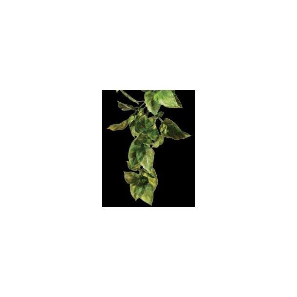 Exo-Terra Plastik Amapallo Medium