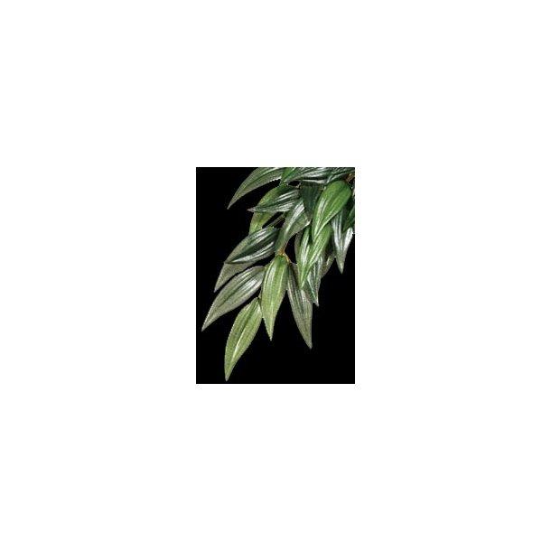 Exo-Terra Silke Rucus Small