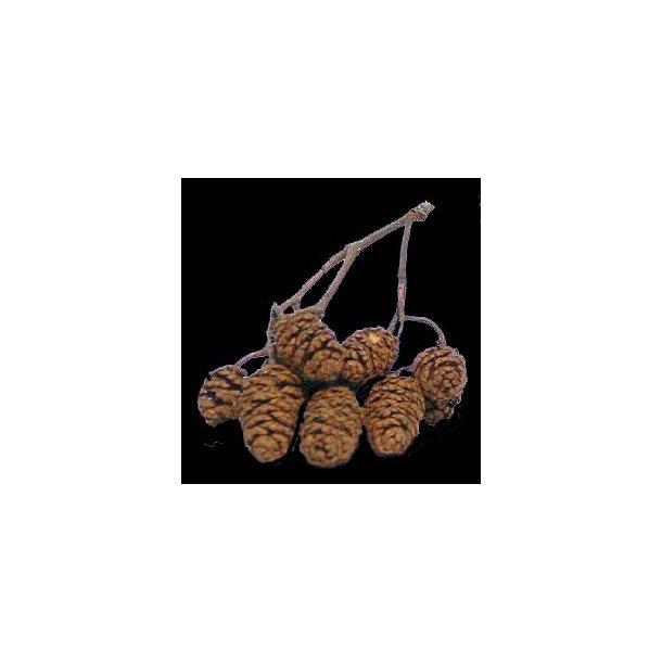 Ellekogler fra Sort elletræ (100 g.)