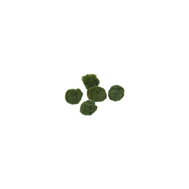 Mosbold (Aegaropila linnaei) M (4-5 cm)